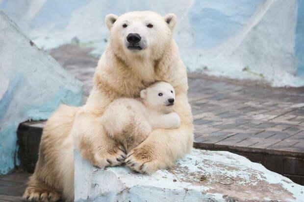 Медвежонок Шилка