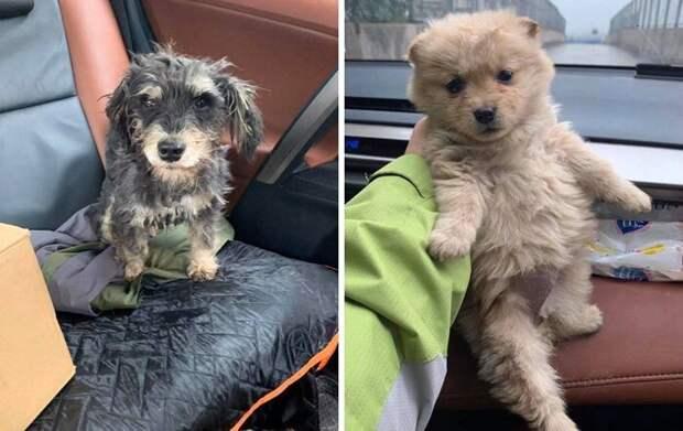 Китайские зоозащитники спасают животных, оставшихся без хозяев из-за коронавируса