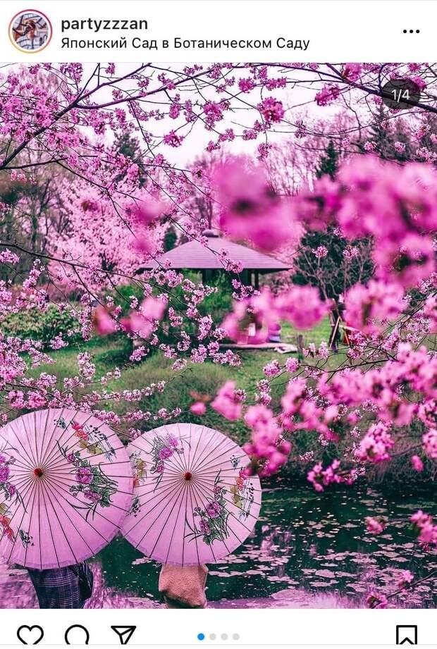 Фото дня: маленькая Япония в Ботаническом саду