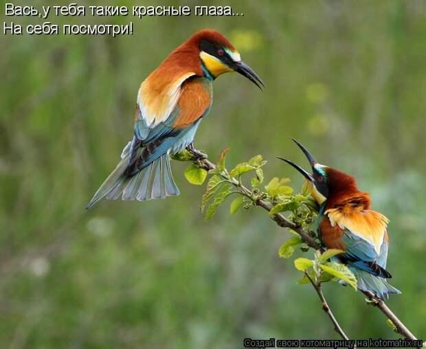 Сизоворонка - Сизоворонка - Птицы - Фотоальбомы - Наш мир