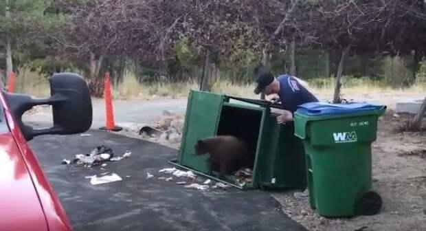 спасение медвежат
