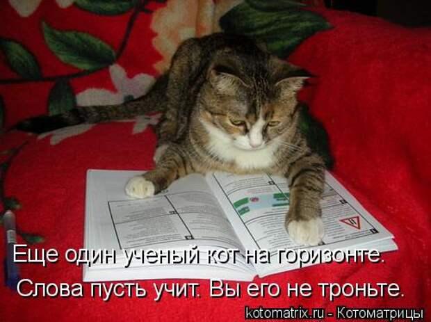 Котоматрица: Еще один ученый кот на горизонте. Слова пусть учит. Вы его не троньте.