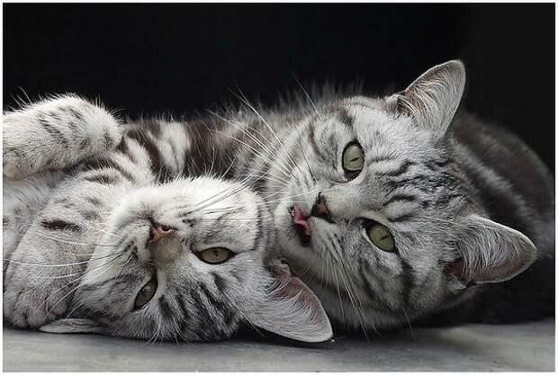 Думать по-кошачьи