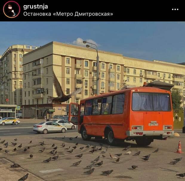 Фото дня: будни у метро «Дмитровская»