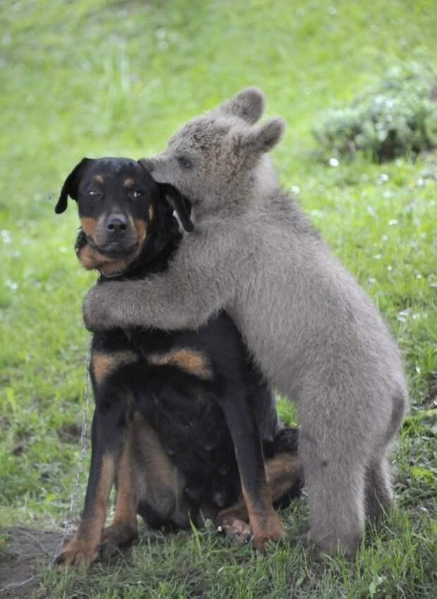 милые животные  у которых не получилось выглядеть устрашающе (2)