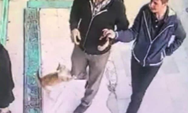 Люди пришли на рынок и столкнулись со сторожевым котом