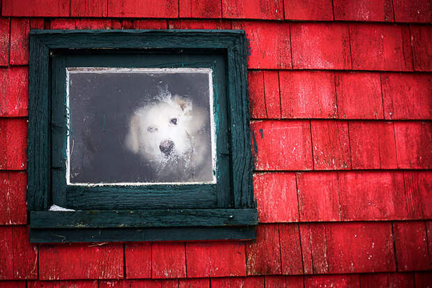 throughwindow01 Нечеловеческое любопытство: что видят в окнах животные