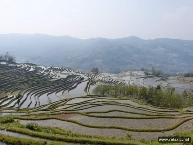 Рисовые террасы Хунхэ-Хани (15 фото)