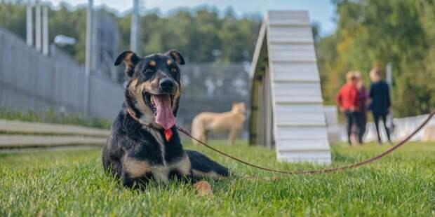 В Лосинке открыли современную площадку для собак