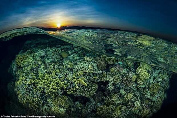 Закат над Красным морем в Египте - Тобиас Фридрих, Германия