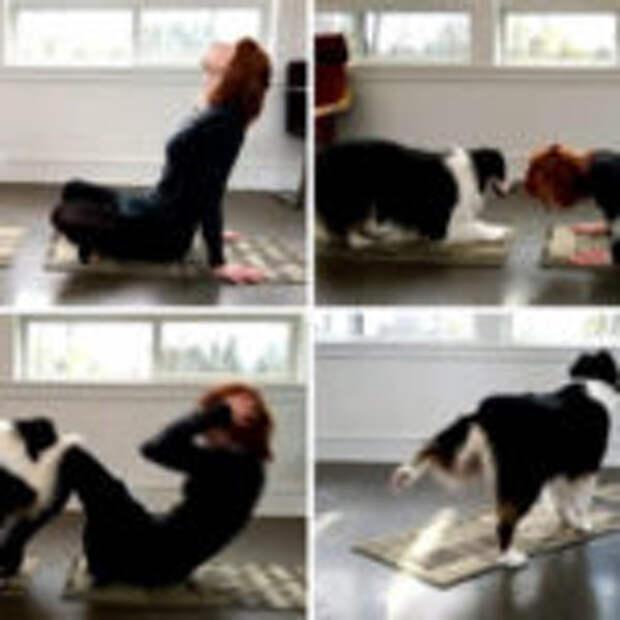 Австралийский шепард вместе с хозяйкой постигает тайны йоги