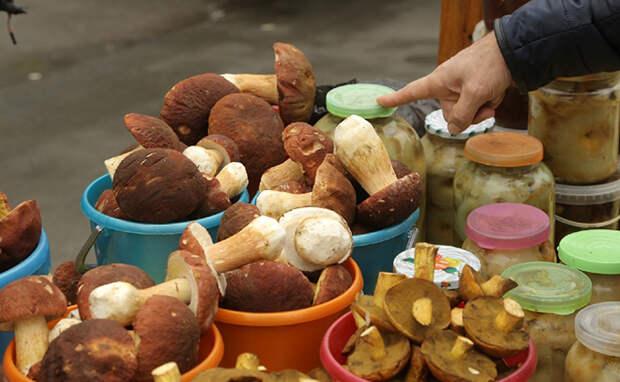 Все тайны грибов в Новосибирске — где растут и как готовить