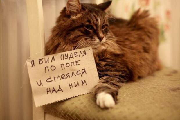 пушистый кот с запиской на груди