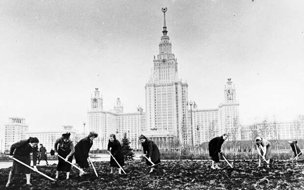 Студенты МГУ на благоустройстве территории Валентин Хухлаев, 10 мая 1953 года, г. Москва, из архива Валентина Хухлаева.