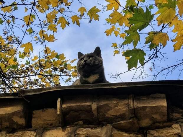 Котенок по кличке Карлсон, который больше не живет на крыше