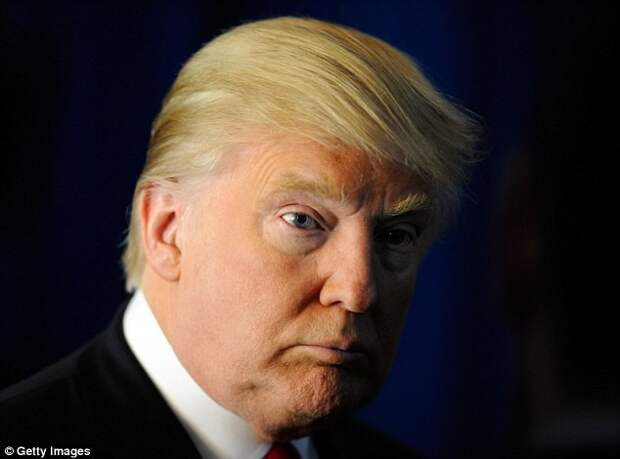 Фазан с узнаваемой прической стал популярен в сети Трамп, фазан