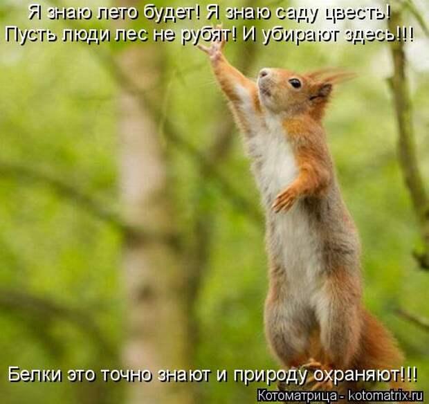 Котоматрица: Пусть люди лес не рубят! И убирают здесь!!! Я знаю лето будет! Я знаю саду цвесть! Белки это точно знают и природу охраняют!!!