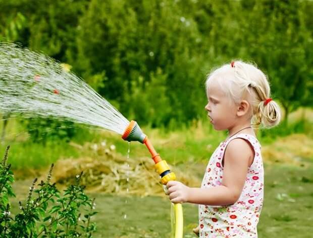 Как поливать огород: полезные советы Дачка Собеседник.ру