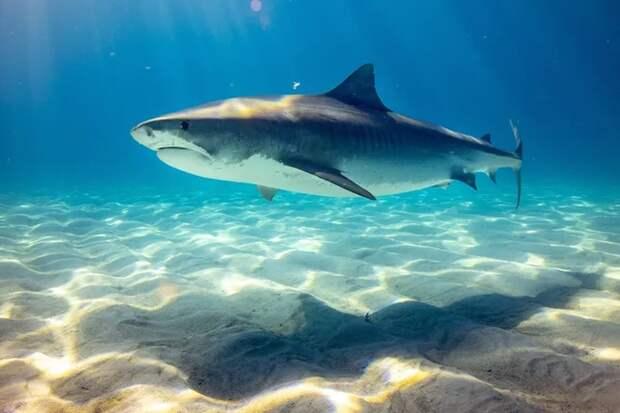 Как работает природный компас акул