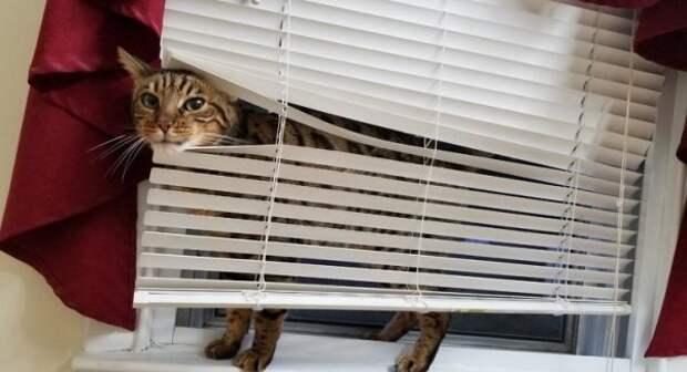 Чем иногда занимаются домашние животные