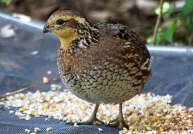 Каких птиц выгодно выращивать
