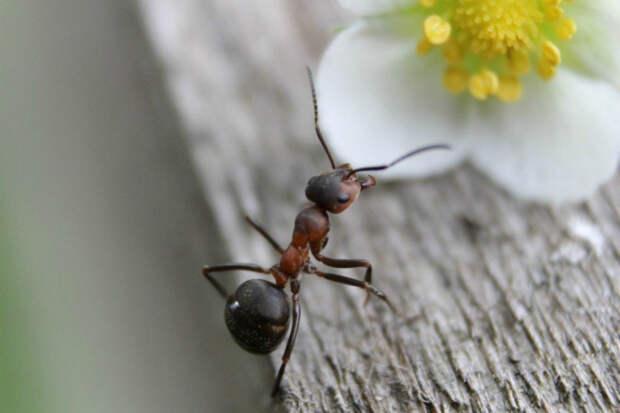 Методы, которые помогут вам вывести муравьев с огорода