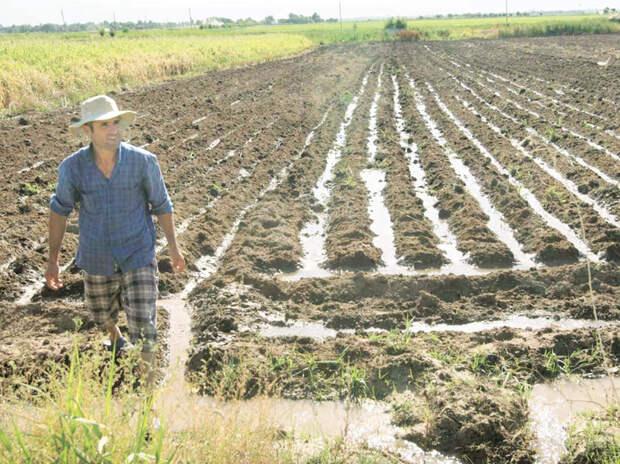 Как бы российское сельское хозяйство: даже корм у поросят импортный