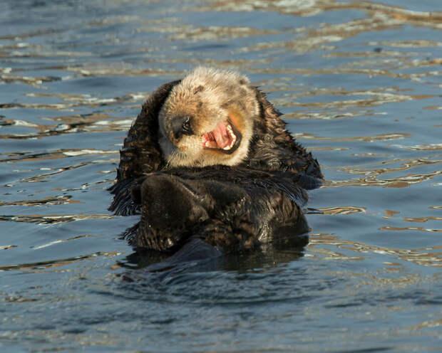 Дэвид DesRochers / Comedy Wildlife Photo Awards 2020