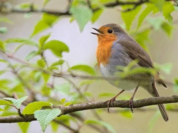 Птицы заметно изменились за 40 лет - орнитологи