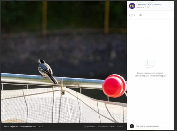 Фото дня: житель поделился снимком с благоустройства Капустинского пруда