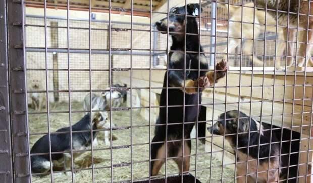 Законопроект оведении учета домашних животных разработают до1декабря