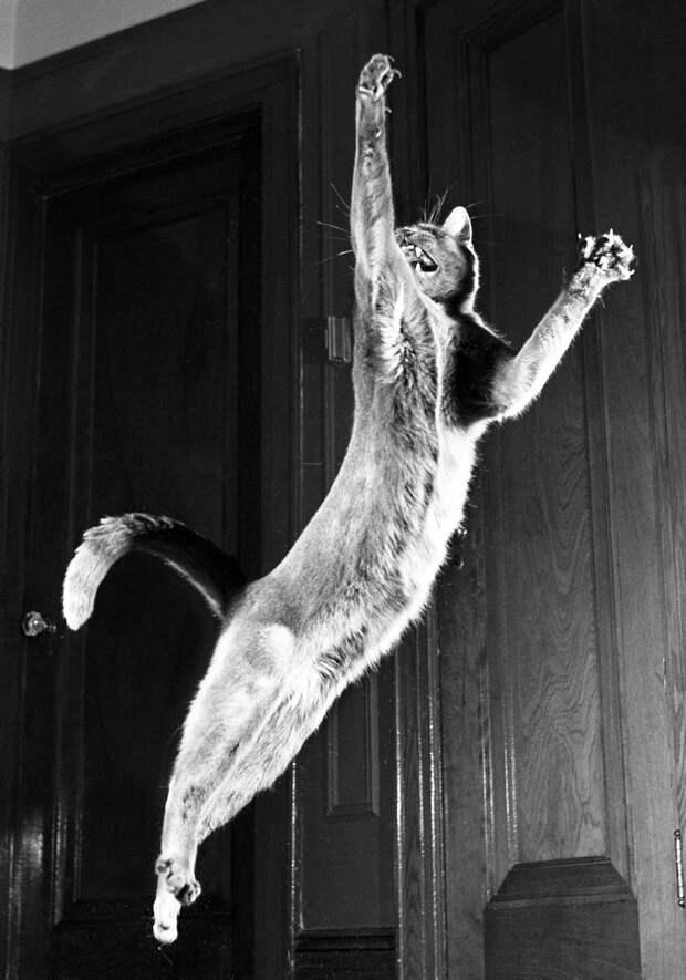 Уолтер Чандоха – человек, который 70 лет фотографировал кошек   7