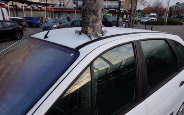 Дерево насквозь пронзило машину — как это? Видеозагадка