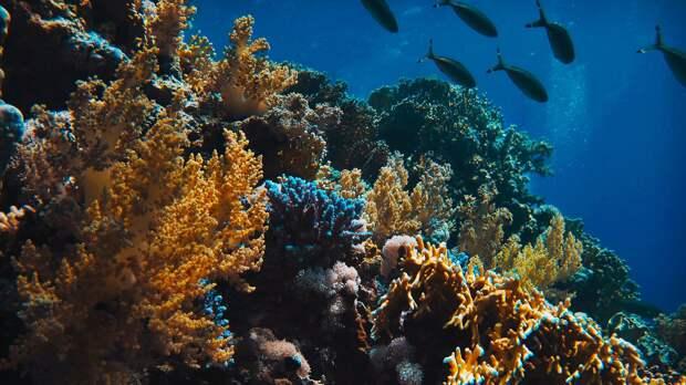 Большая часть коралловых рифов может исчезнуть к 2050 году