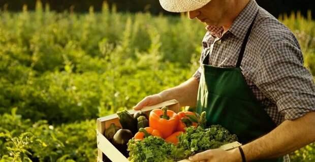 Турецкие помидоры заполонили российские прилавки: овощи напичканы гадостью, которая вызывает рак