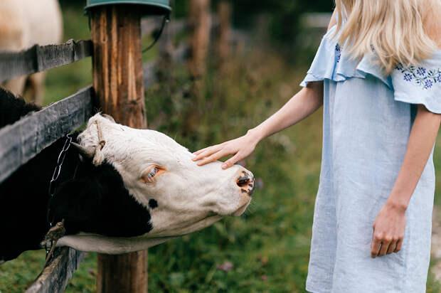 Девушки разделись по пояс у здания Минсельхоза для защиты коров