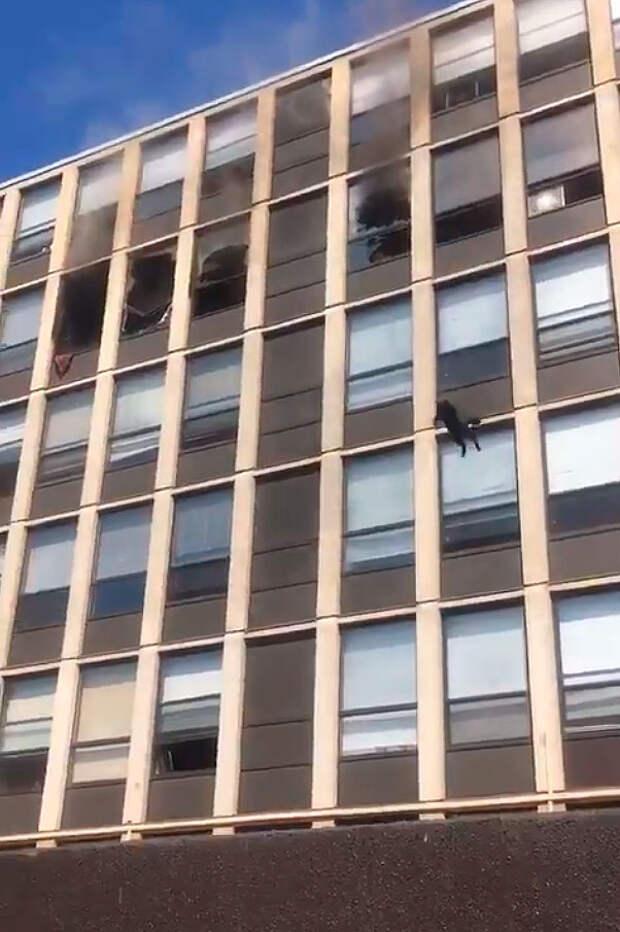 Кот выпрыгивает с пятого этажа горящего дома: видео