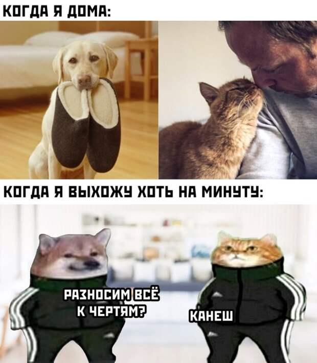 Кот и собака пока меня нет дома