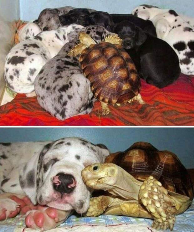 «Очень важные» картиночки с домашними животиночками