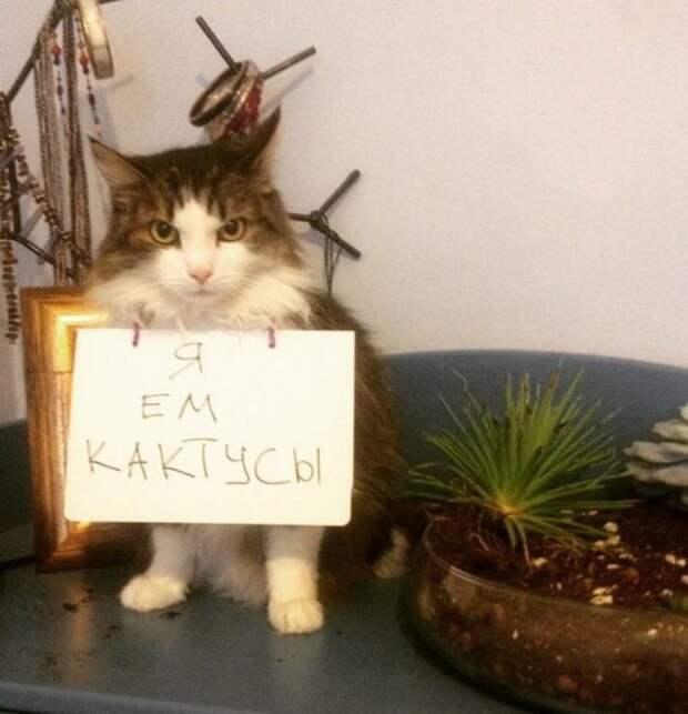 кот с табличкой на груди