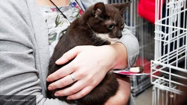 Длинная травинка заставила хозяев переживать за жизнь своей кошки