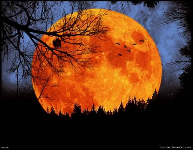 огромная оранжевая луна..