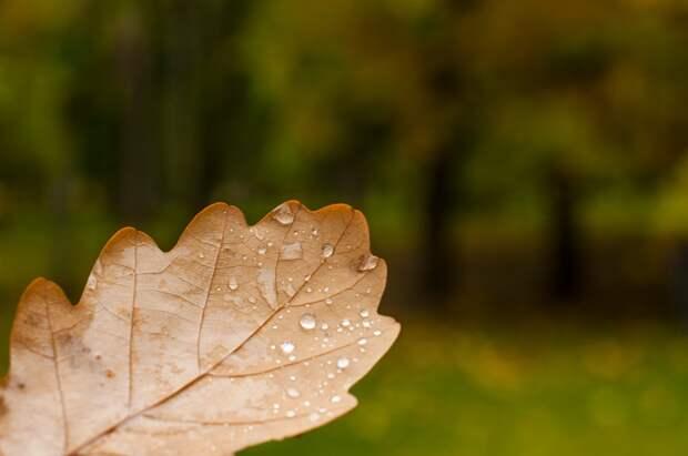 Дожди вернутся в Удмуртию в ближайшие дни