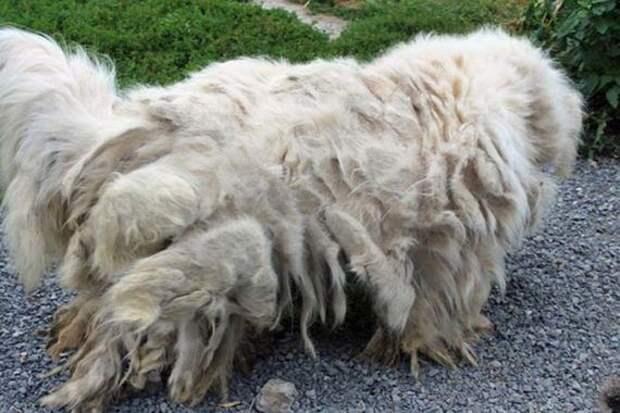 В этом грязном мохнатом существе трудно было разглядеть собаку...