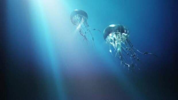 Знакомьтесь: медузы!