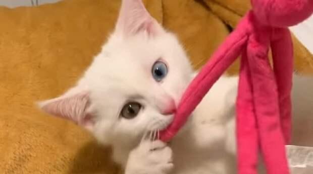 Хозяйка боялась, что коты не поладят, но однажды застала умилительную картину