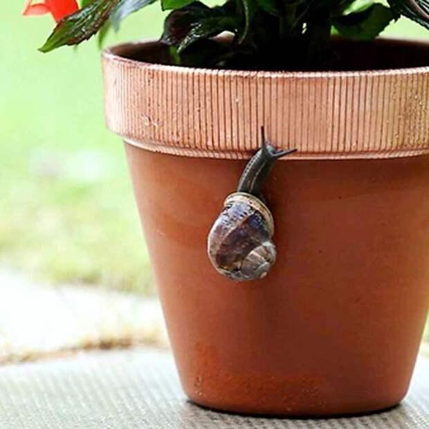 Как защитить ваши растения от улиток