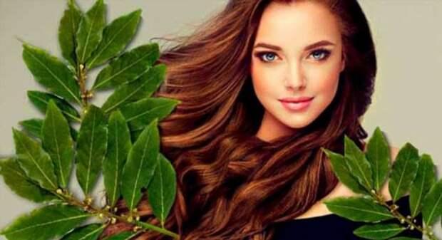 Как с помощью лаврового листа сделать кожу гладкой и упругой, а волосы — густыми и блестящими