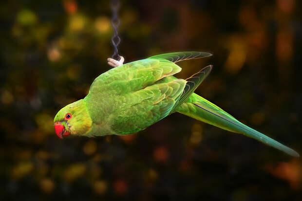 В Австралии домашний попугай спас владельца от пожара