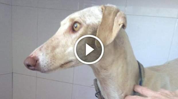 Собака со сломанной лапой 3 км вела за собой врачей, чтобы спасти своих деток
